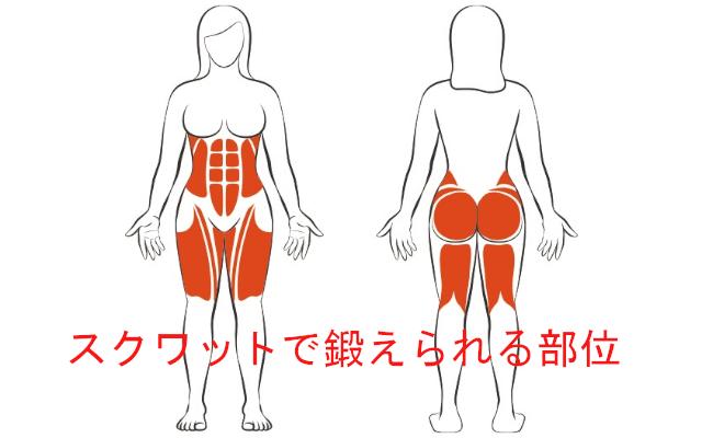 筋肉で鍛えられる部位