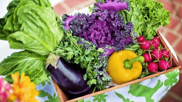 有機野菜と無農薬野菜の違いは?